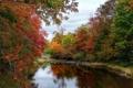Картинка лес, осень, деревья, небо, река, камни