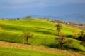 Картинка поле, трава, деревья, пейзаж, горы, холмы
