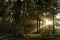 Картинка свет, деревья, природа