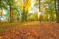 Картинка осень, листья, солнце, лучи, деревья, парк, скамья