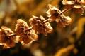 Картинка осень, солнце, макро, свет, природа, nature, autumn