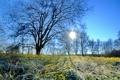 Картинка иней, трава, природа, утро