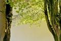 Картинка природа, весна, деревья