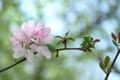 Картинка цветы, фон, ветка, розовые