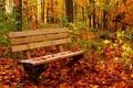Картинка лес, осень, листва, цвета, скамейка