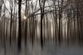 Картинка лес, природа, стиль