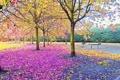 Картинка осень, листья, деревья, парк, сквер, скамья