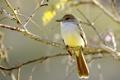 Картинка дерево, птица, ветка