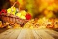 Картинка осень, тыквы, корзинка, рябина