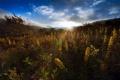 Картинка небо, трава, солнце, лучи, деревья, цветы