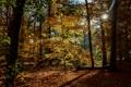 Картинка осень, листья, деревья, парк, Нидерланды, лучи солнца, Maurick Castle Park