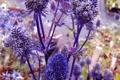 Картинка цветы, ветки, растение, шишки, колючка