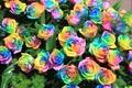 Картинка розы, радуга, букет, лепестки