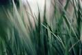Картинка растение, зелень, трава, макро