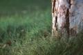 Картинка трава, макро, дерево