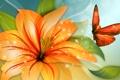 Картинка цветок, коллаж, бабочка, крылья, лепестки