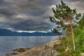 Картинка облака, Sognefjord, Согне-фьорд, Норвегия, дерево, сосна, Norway