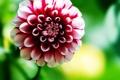 Картинка цветок, обои, фото, лето