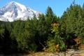 Картинка дорога, лес, гора, ледник, США, Mount Rainier National Park