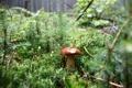Картинка лес, гриб, дырки