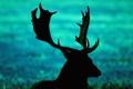 Картинка поле, трава, олень, силуэт, рога