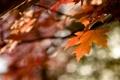 Картинка осень, листья, цвета, оранжевый, время, лист, блики