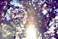 Картинка небо, цвета, солнце, цветы, растительность, by mike pro