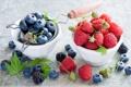 Картинка листья, ягоды, малина, черника, ежевика, голубика, Anna Verdina