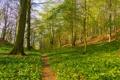 Картинка лес, трава, деревья, весна, склон, тропинка