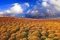 Картинка небо, солнце, облака, лучи, пейзаж, растительность, красота