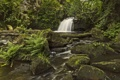 Картинка лес, река, камни, Англия, водопад, папоротник, England