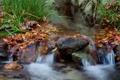 Картинка осень, трава, листья, ручей, камни, водопад