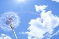 Картинка небо, солнце, облака, радуга, Одуванчик