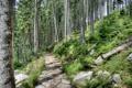 Картинка лес, деревья, парк, камни, склон, дорожка, тропинка