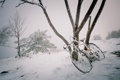 Картинка снег, велосипед, дерево