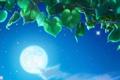Картинка небо, листья, ночь, дерево, луна, листва, арт