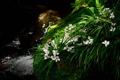 Картинка трава, макро, растения, цеты