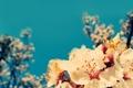 Картинка небо, вишня, синева, ветка, сакура, цветение