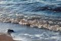 Картинка песок, пена, вода, макро, берег, камень, волна