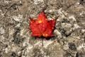 Картинка осень, камень, оранж, текстура, лист, макро