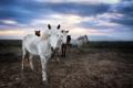 Картинка закат, кони, поле