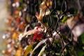 Картинка осень, листья, макро, природа, фото, сетка, обои