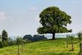 Картинка поле, деревья, пейзаж, природа