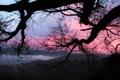 Картинка небо, закат, ветки, дерево