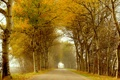 Картинка дорога, осень, листья, деревья, человек, аллея, пешеход