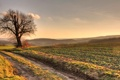Картинка пейзаж, природа, дерево