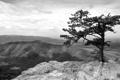 Картинка высота, горы, черно-белое, дерево