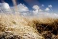 Картинка облака, небо, солнце, лето, поле, травы, обои