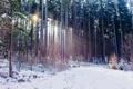 Картинка зима, осень, лес, свет, снег, природа