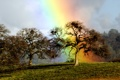 Картинка дерево, радуга, дуб, rainbow oak